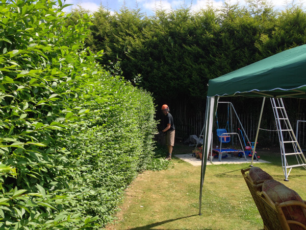 A privet hedge that we were asked to bring back into line.
