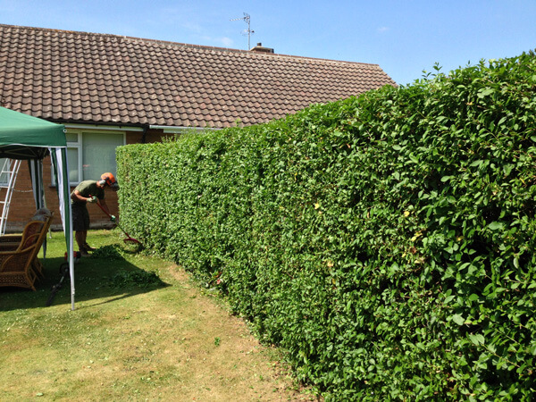 The hedge was reduced back to the specification, the tidy up is underway.
