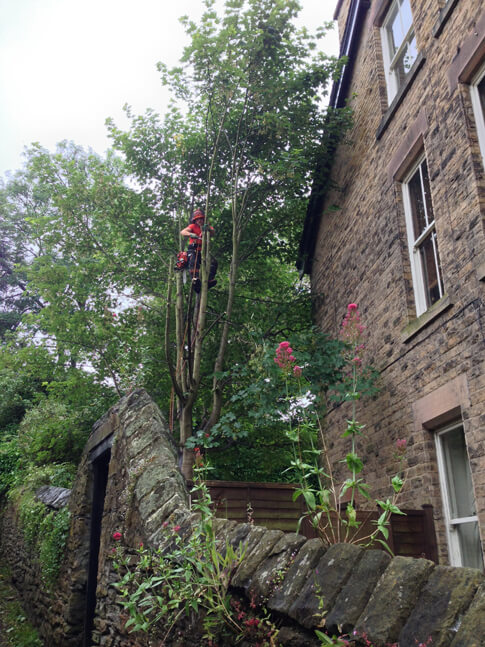We carefully dismantled the branches due to the proximity to the house and the small space we had to drop them in