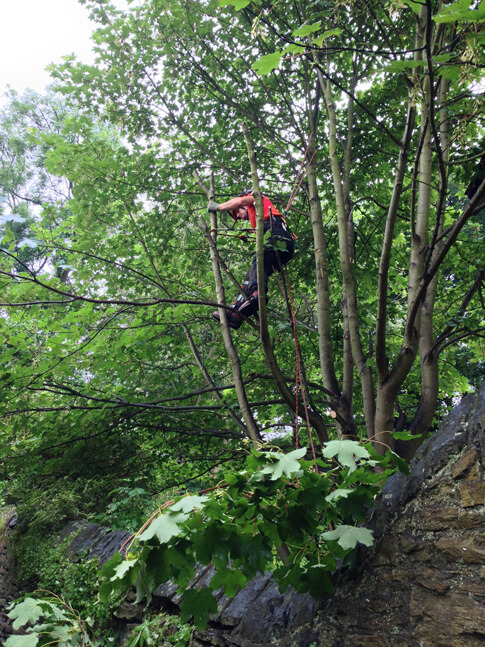 Dismantling the branches over the public footpath