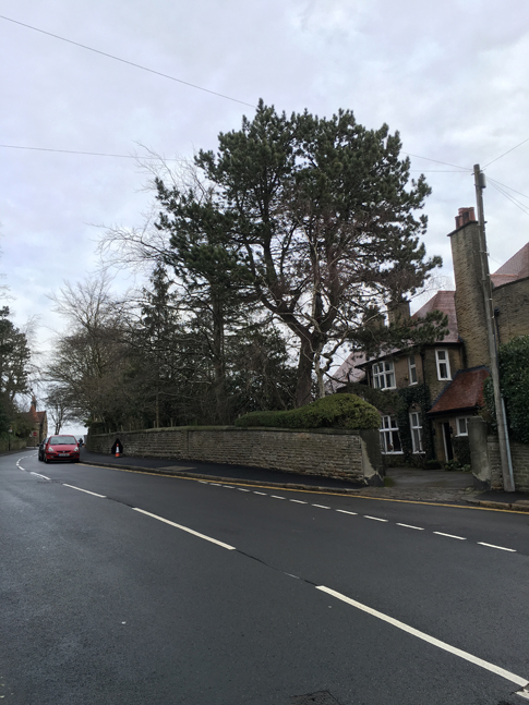 The Pine tree, viewed from the road