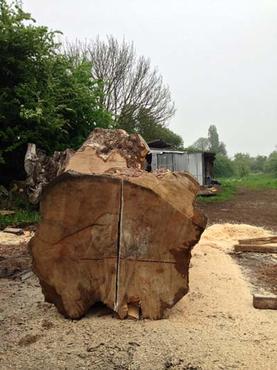 Processing the timber to create manageable pieces for milling