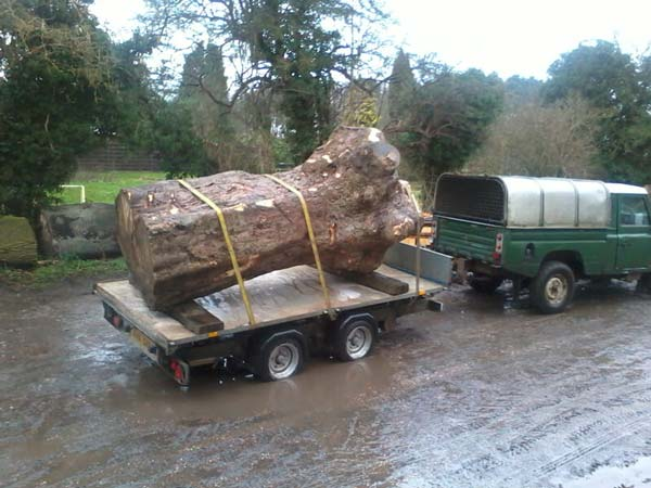 Transporting the timber