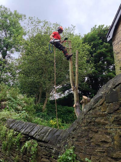 Sycamore removal in Ecclesall