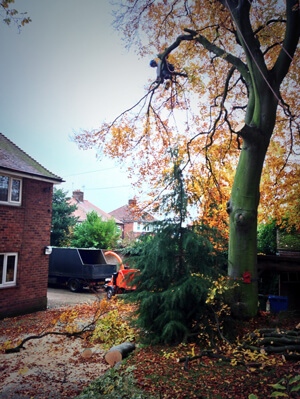 Tree Removal, Sheffield UK