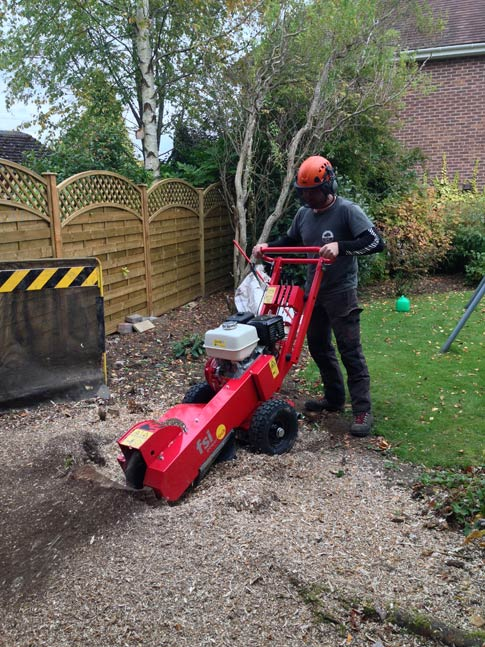 Tree stump removal Sheffield