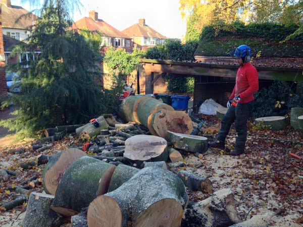 With the stem felled we logged up all the timber for the client
