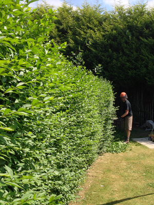 Hedge Cutting Sheffield